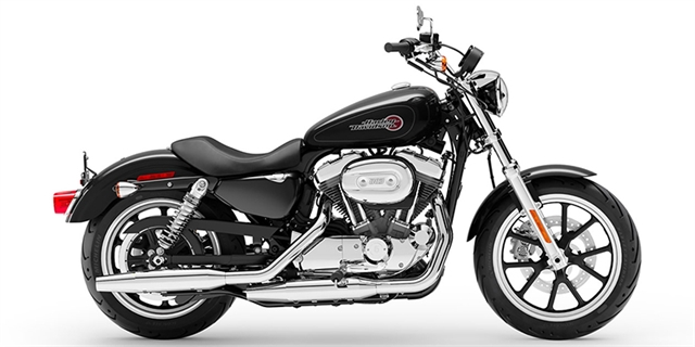 2019 Harley-Davidson Sportster SuperLow at Bumpus H-D of Memphis
