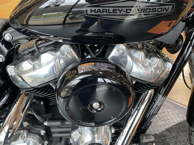 2021 Harley-Davidson FXST - Softail Standard at Gold Star Harley-Davidson