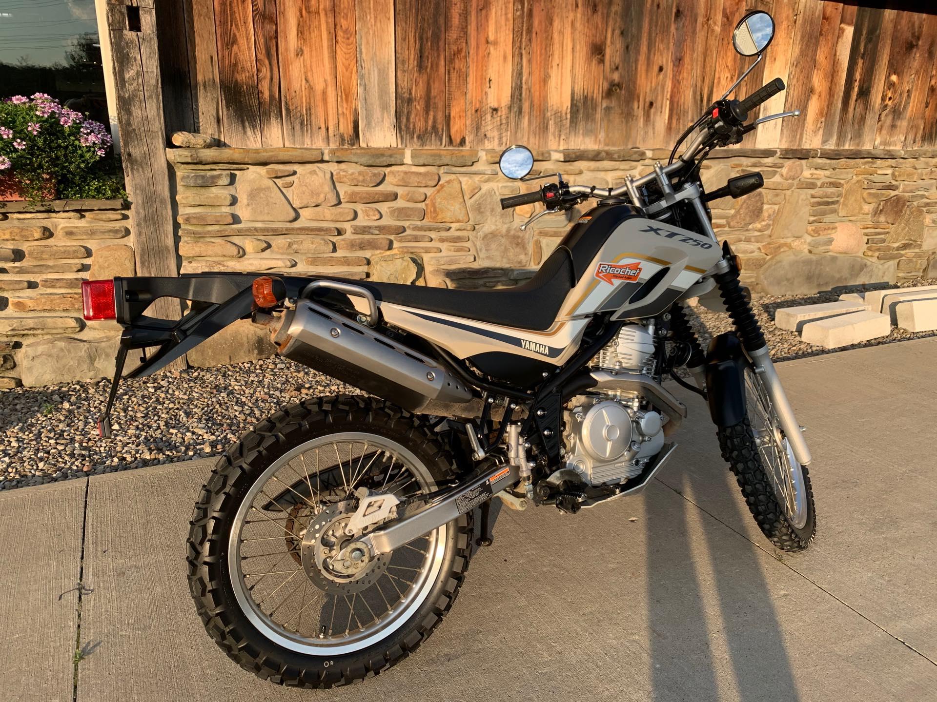 2019 Yamaha XT 250 at Arkport Cycles