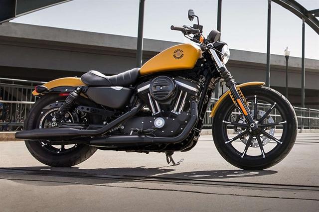 2019 Harley-Davidson Sportster Iron 883 at Carlton Harley-Davidson®