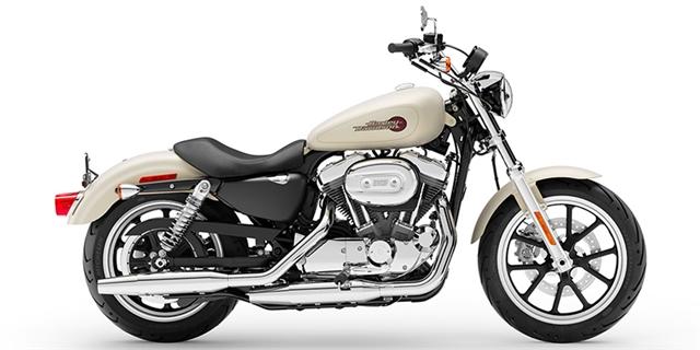 2019 Harley-Davidson Sportster SuperLow® at Thunder Harley-Davidson